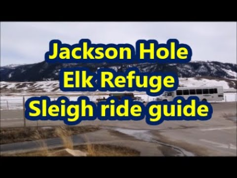 Elk Refuge sleigh ride guide