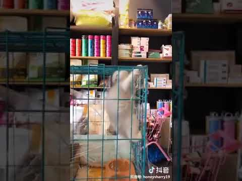 Cat Series: A cute kitten is trying to escape from cage