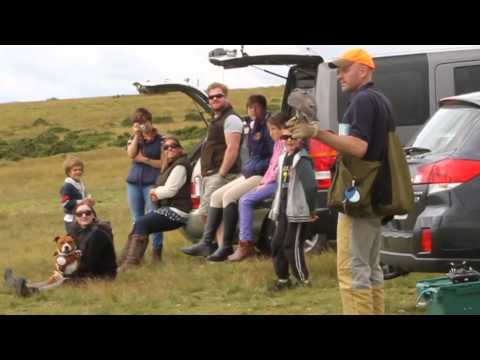 Pete Smith (Y2K Falconry) Quad Copter Training