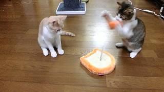 おもしろネコ動画いろいろニャンコ(*'∀') 超笑えるwwwおもしろ猫動画総...