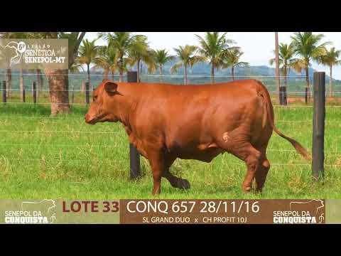 LOTE 33 CONQ 657