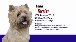 Cairn Terrier - Meister Petz Tv Rasseportrait Mpt 117