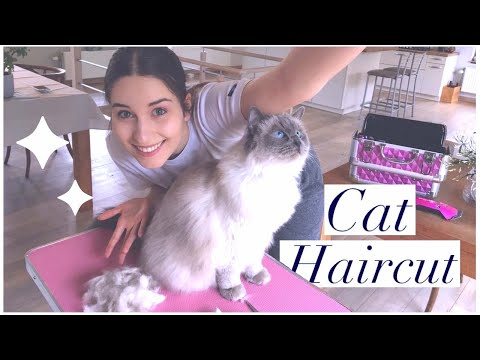 My CAT Gets A HAIRCUT ✧ For The FIRST TIME!