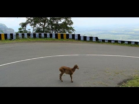 Pollachi Valparai Route VIa Athirapally  : Most beautiful route in South India