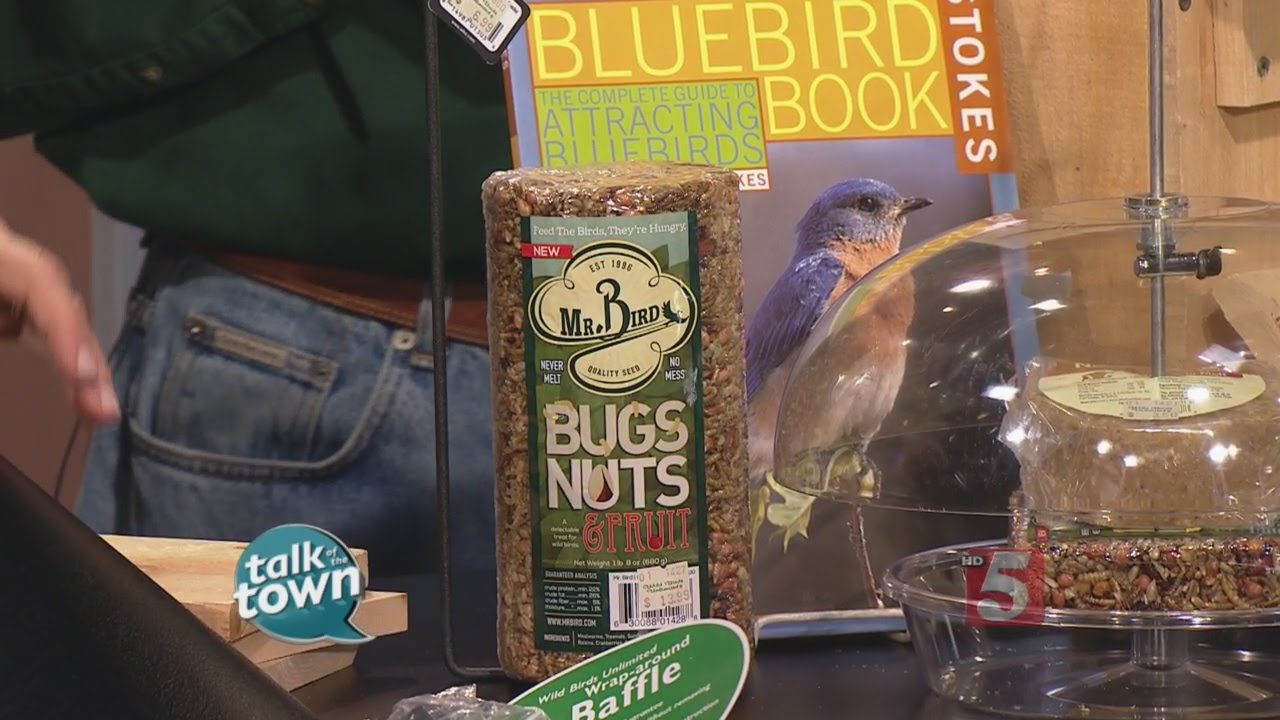 Attracting Bluebirds To Your Yard   YouTube