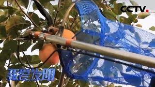 《我爱发明》 20200115 水果采摘器|CCTV农业