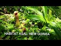 7 Nepenthes insignis