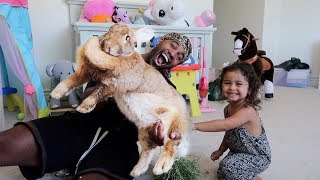 SURPRISING THE ACE FAMILY WITH THE WORLD'S BIGGEST RABBIT!!!