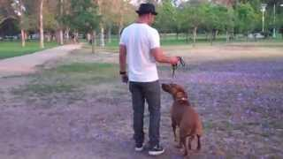 The Good Dog Minute 6/4/13: Severe Leash Aggression With Biting Turned Around In Minutes!