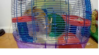 Our Crazy & Funny Hamsters