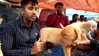 CUTE DOG PUPPY AT GALIFF STREET PET MARKET WEST BENGAL   2ND FEBRUARY 2020 VISIT WITH SELLER  NO.