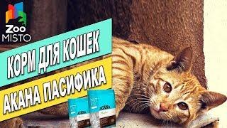 Корм для кошек Акана Пасифика Кет   Обзор корма для котов   Acana Pacifica Cat review