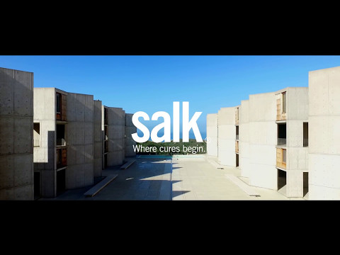 Salk architecture - the grove