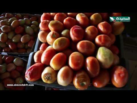 الموسوعة الخضراء - الموسم الثاني - الطماطم