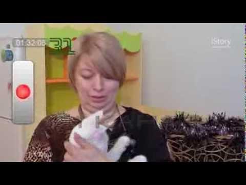 Инструкция по уходу и содержанию Мейн кунов. Большие кошки Мейн кун (Main coon).