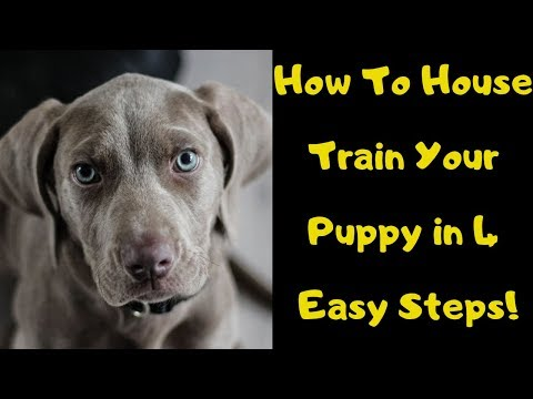 how-to-house-train-a-puppy-in-4-easy-steps!