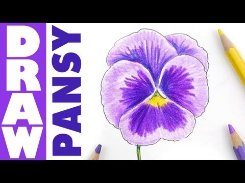 How to draw a Pansy in colour pencils - tutorial