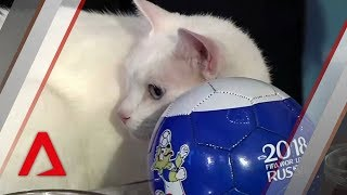 Achilles the World Cup oracle cat