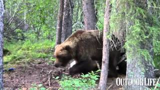 Video: Way Too Close to a Grizzly, Pt. 2