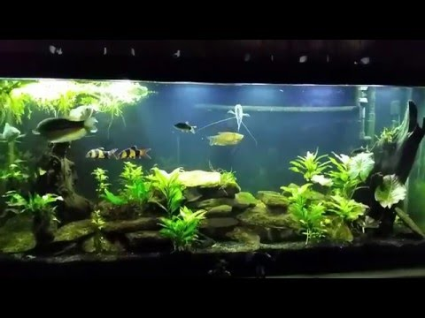 Stocking Density In Your Aquarium. 1inch Of Fish Per Gallon?