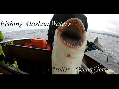 Commercially Fishing In Alaskan Waters - Catching Salmon - S
