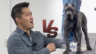 """Are you crazy?"" The reason for Kang Hyung-wook's extreme anger. A 3-month-old Cane Corso."