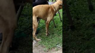 Video Anjing sange pengen ngentot download MP3, 3GP, MP4, WEBM, AVI, FLV Oktober 2017