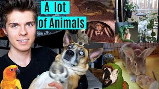 tour of all my animal enclosures updated