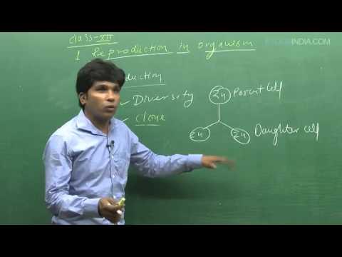 Reproduction in Organism by M. Asad Qureshi (MAQ) Sir (ETOOSINDIA.COM) thumbnail