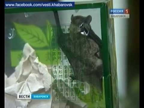 Вести-Хабаровск. Меня будить!