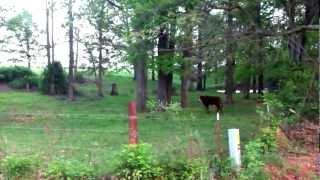 Arkansas 2012 trip