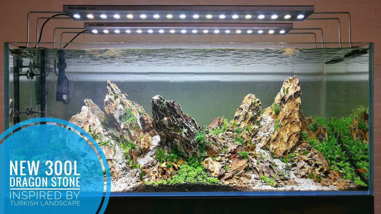 NEW 300L - Dragon stone aquascape inspired by the Turkish ...