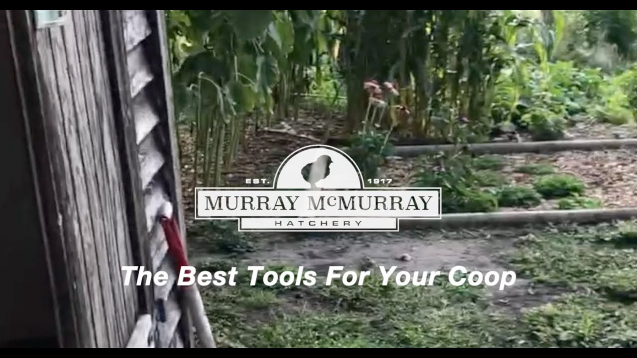 Best Tools For Your Chicken Coop | McMurray Hatchery