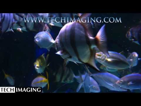 High Speed Video Camera - Fish swimming