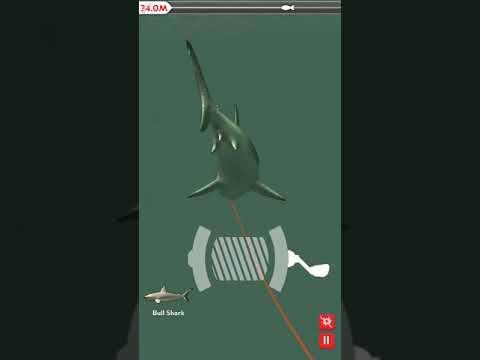 Rapala Daily Catch - How To Catch Bullshark [Full Video]