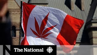 vuclip Marijuana legalization gives 420 and cannabis culture a different meaning