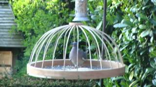Feeding Station Intended For The Small Garden Birds! ... Or Is It?