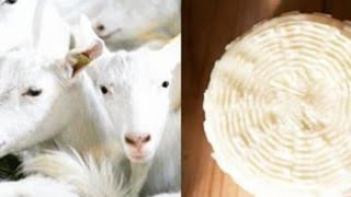 Варю козий сыр рецепт в описании