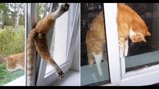 Fun and Fails - funny dogs and cats fails - Funniest Fails