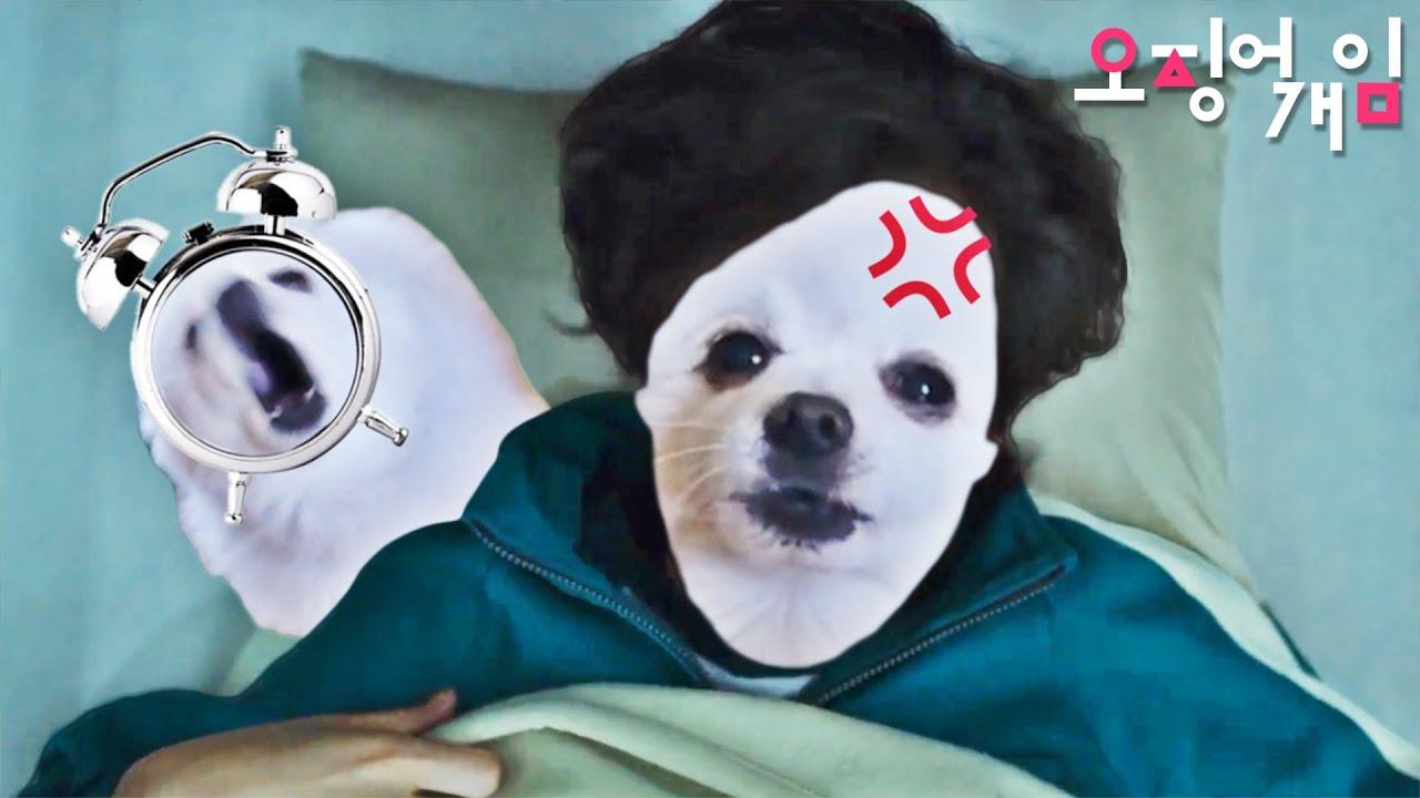 오징어게임 (X)  오징어개임 (O) - 모닝콜 강아지 리믹스 Squid Game Morning Call (Dog Remix)