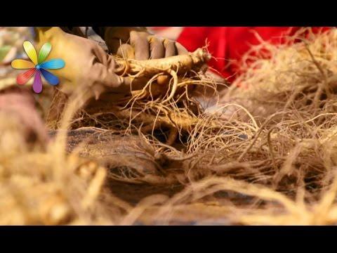 Травы для похудения от Алены Куриловой: муж худеет без усилий – Все буде добре. Выпуск 991от29.03.17