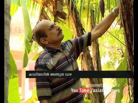Miraculous Banana Tree in Kowdiar Thiruvananthapuram