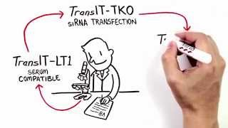 The Simplicity of Transfection