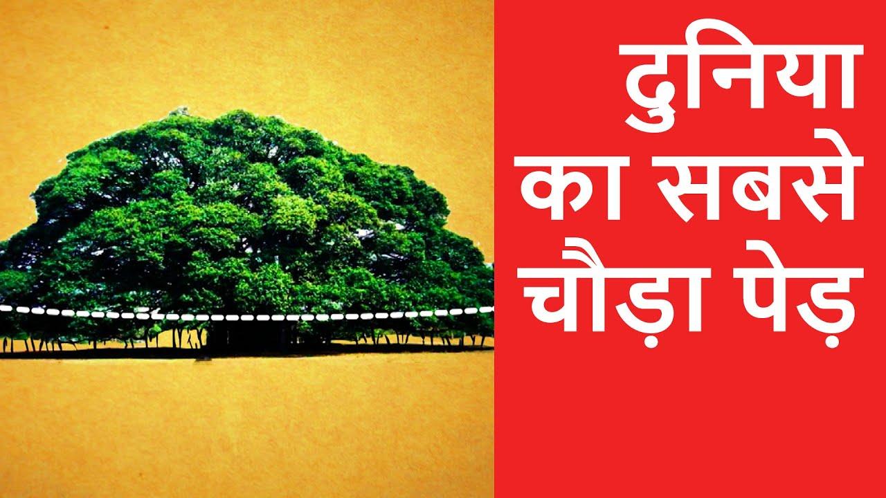 The Great Banyan Tree Omg Yeh Mera India Youtube