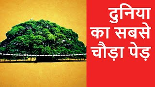The Great Banyan Tree - OMG! Yeh Mera India