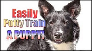 Howdini - How To Potty Train a Puppy - How to House Train Your Dog - Howdini