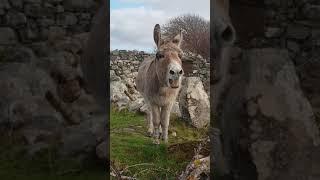 Harriet the Singing Donkey