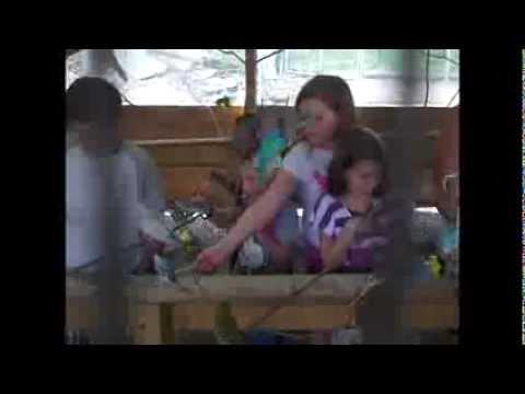 Vlog: Deer Park! (Jamestown, Pennsylvania)