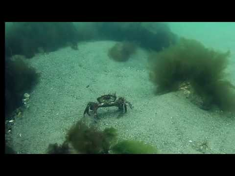 underwater metal detecting ireland