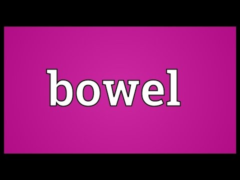 Bowel Meaning